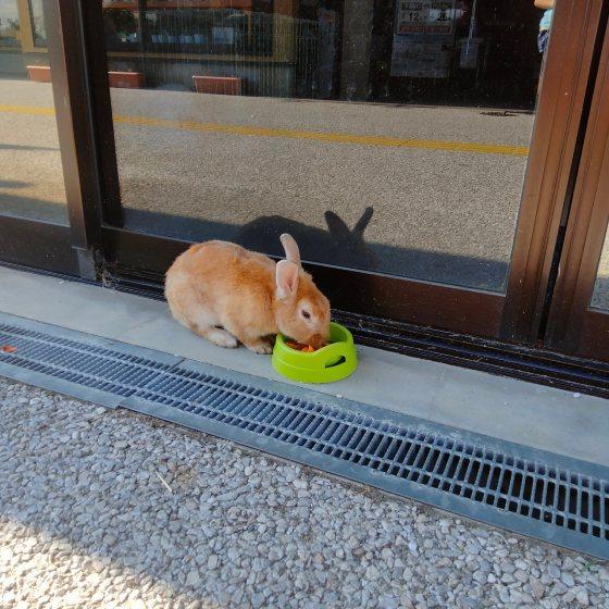 うさぎ 餌 食べる 写真 画像 モグモグ ウサギ