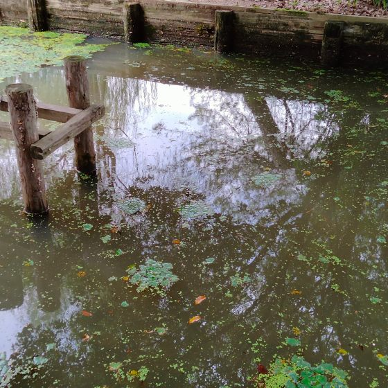 水面 池 公園 浮き草 水草 写真 画像