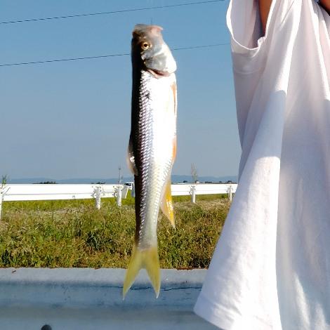 クリーク 浮き釣り 河川 写真 画像 ニゴイ