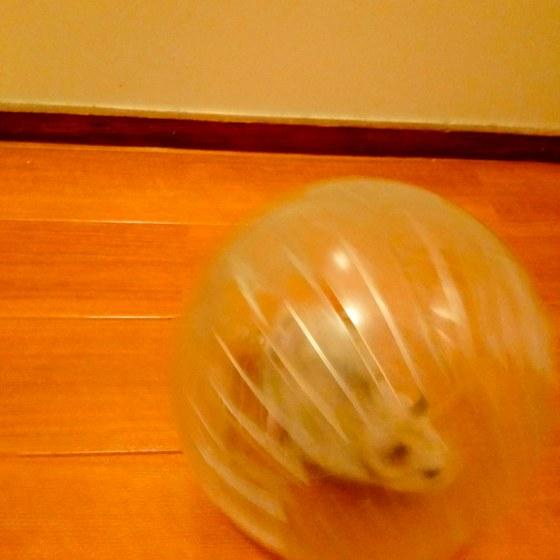 ハムスターボール 透明 ハムスター ランナーボール ランニングボール 写真 画像