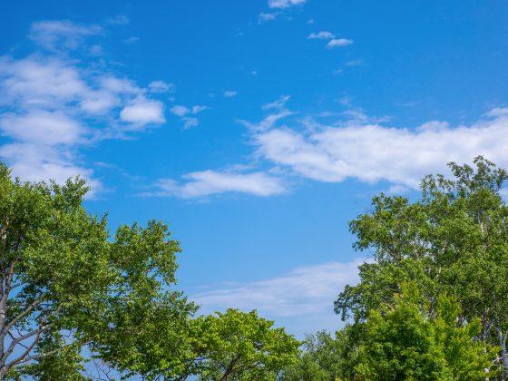 青空 空 木 自然 気分爽快 写真 画像
