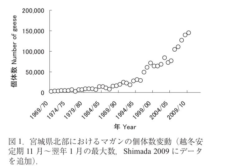 宮城県北部におけるマガンの個体数変動