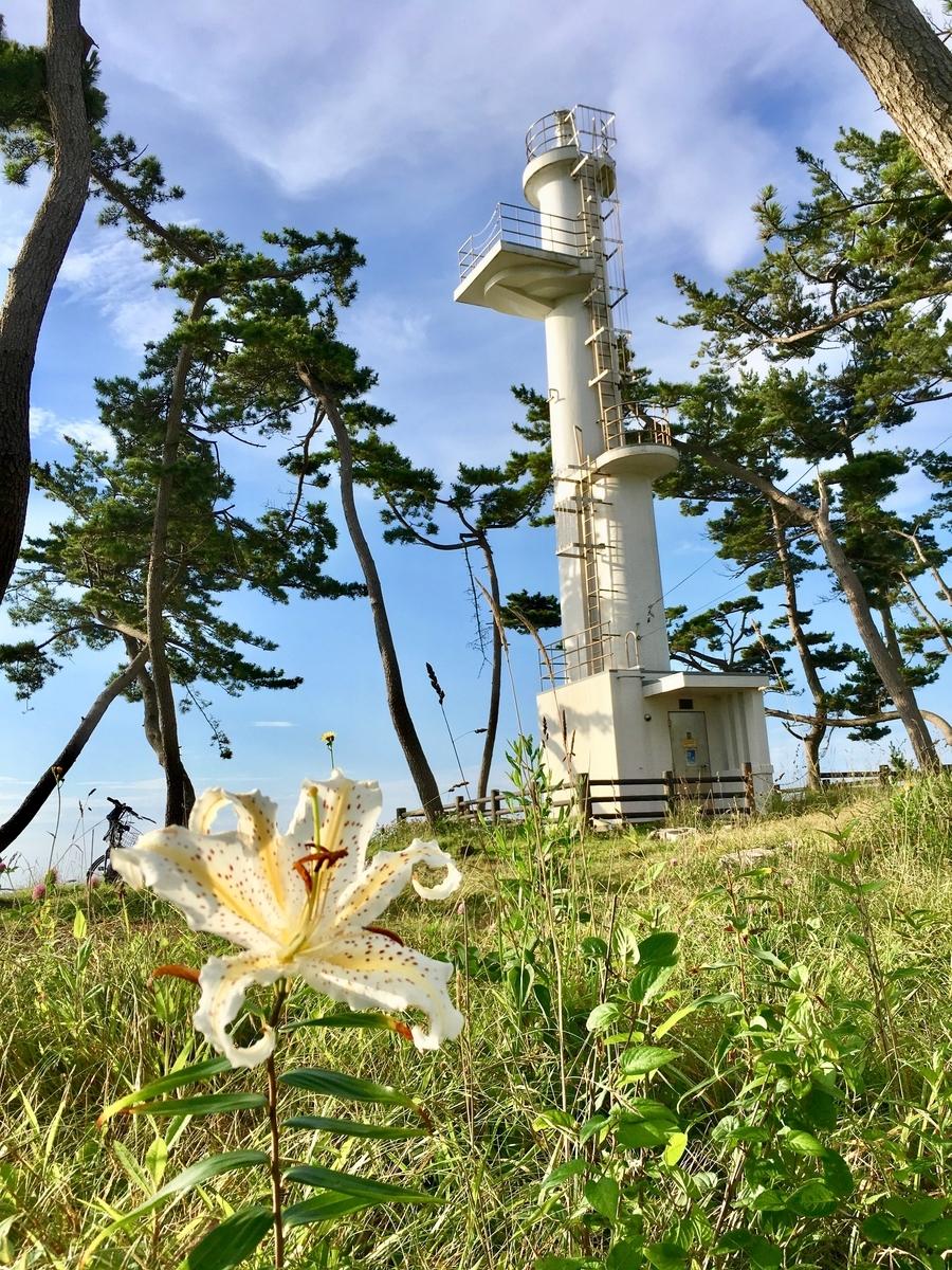 ヤマユリと岩井崎灯台