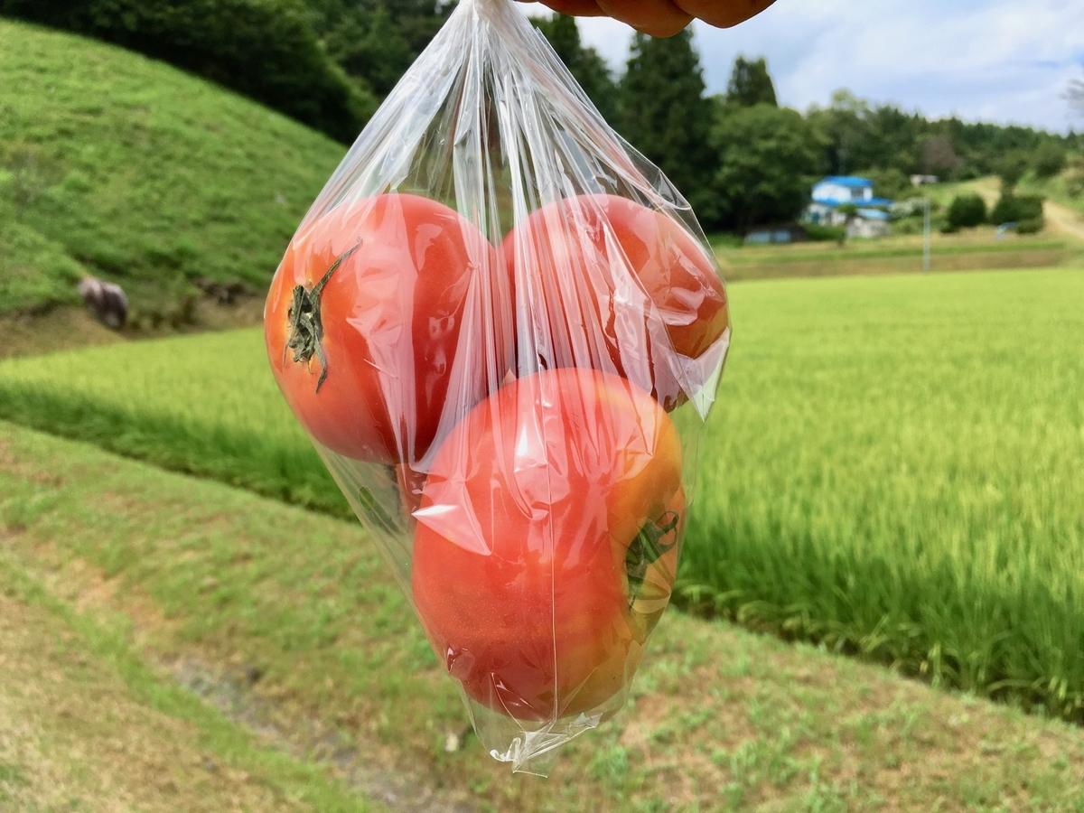 産直トマト3個100円