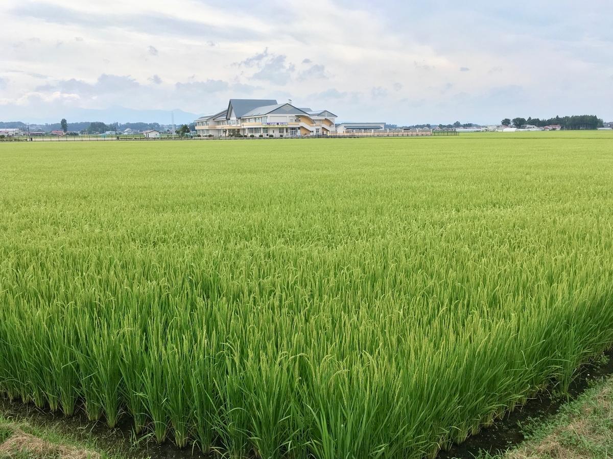 水沢 秋の田園風景
