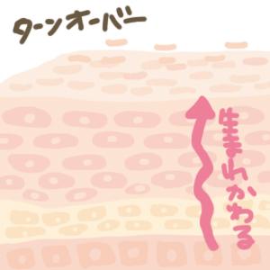 f:id:menekiryoku:20180104230112j:plain