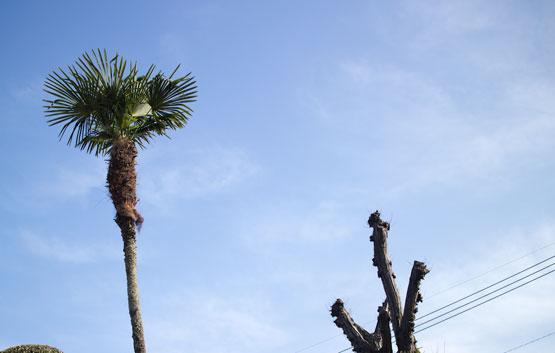 南国っぽい木の写真です。