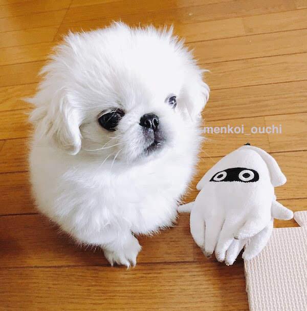 f:id:menkoi-ouchi-mikan:20191213145626j:plain