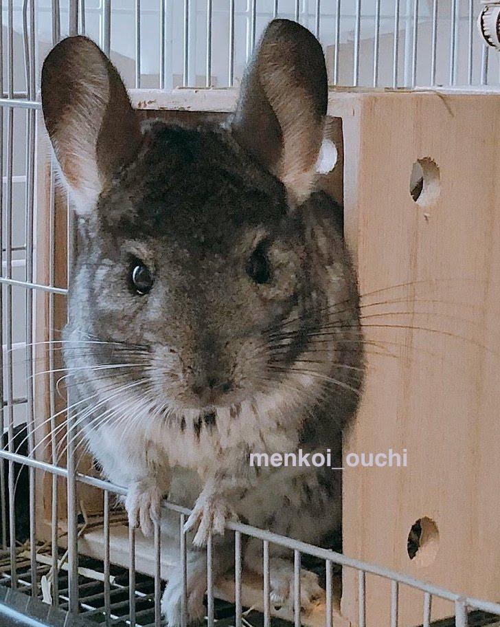 f:id:menkoi-ouchi-mikan:20200105143240j:plain