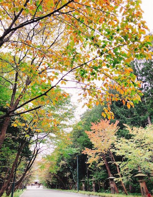 f:id:menkoi-ouchi-mikan:20201012183048j:plain