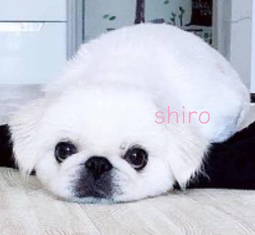 f:id:menkoi-ouchi-mikan:20201117124346j:plain