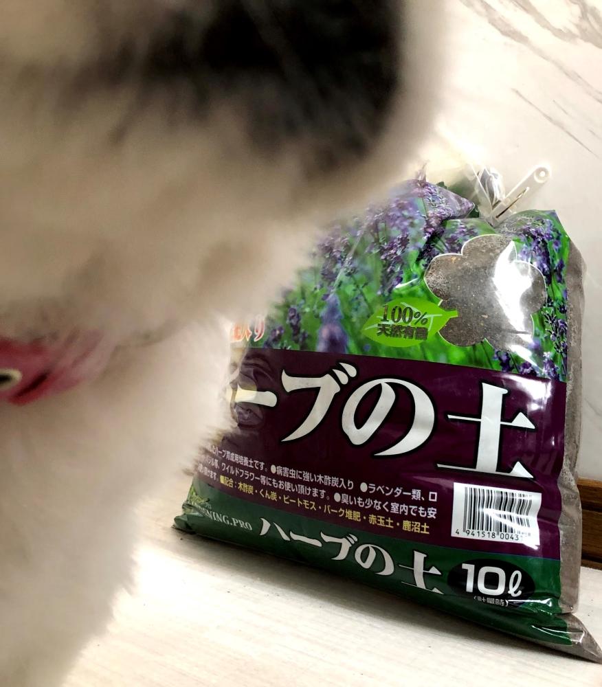 f:id:menkoi-ouchi-mikan:20210614140856j:plain