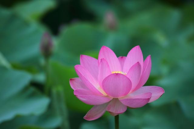 不安や辛い過去に響くお釈迦様の教え「一夜賢者の偈」
