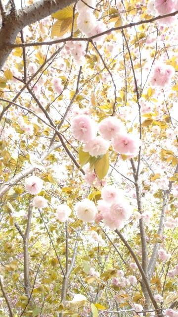 f:id:meoto_hitsuji:20210406233054j:image
