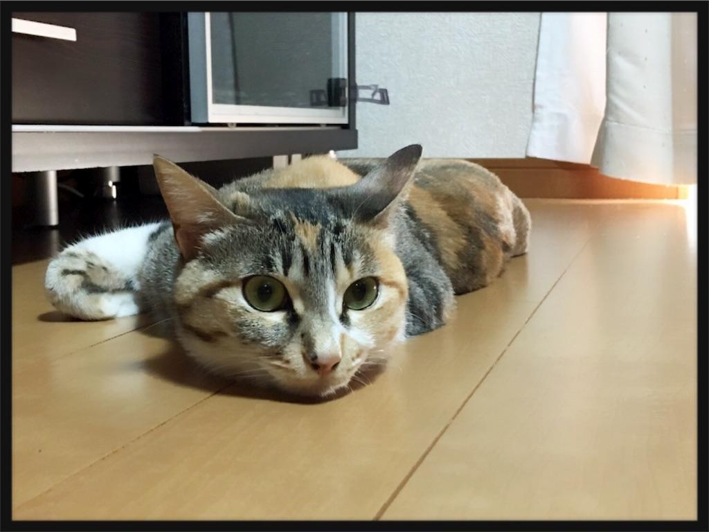 f:id:meow_mewmew:20170131103618j:image