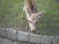鹿寄ってきたああああ!