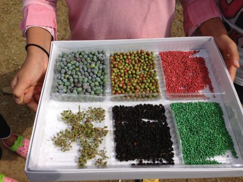集めた木の実や種