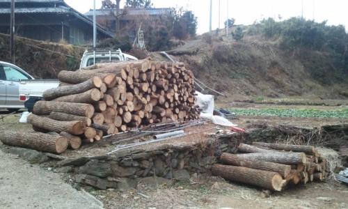移動させた原木