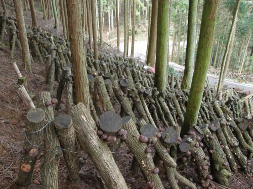 原木が立っている様子