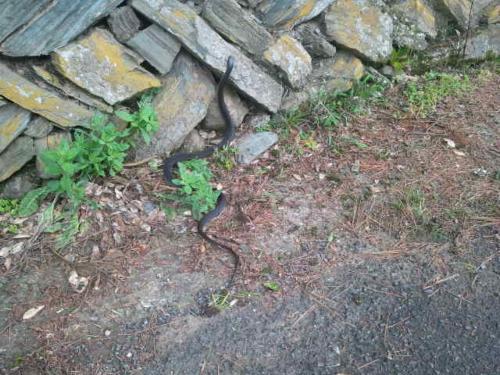 無害のヘビ