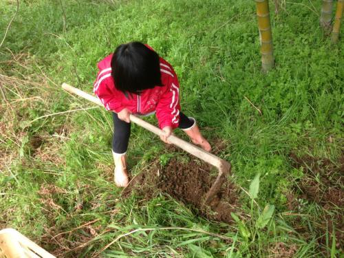 初タケノコ掘り体験