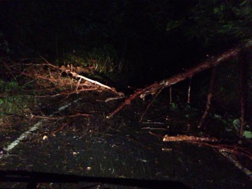 道路の倒木
