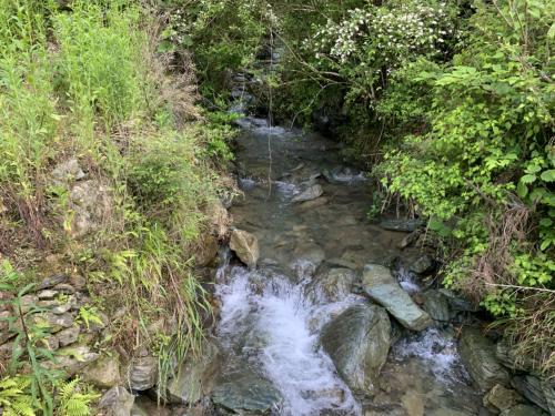 ビオトープのための川の調査