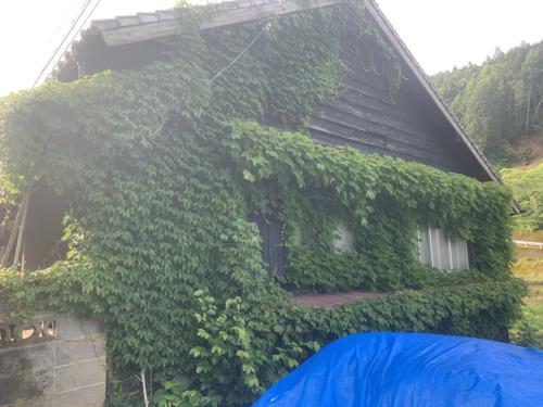 グリーンカーテン?