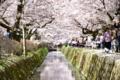 京都新聞写真コンテスト 春風に誘われ