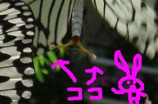 f:id:mereco:20070322191000j:image