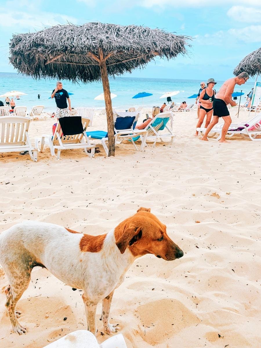 ビーチにいる犬