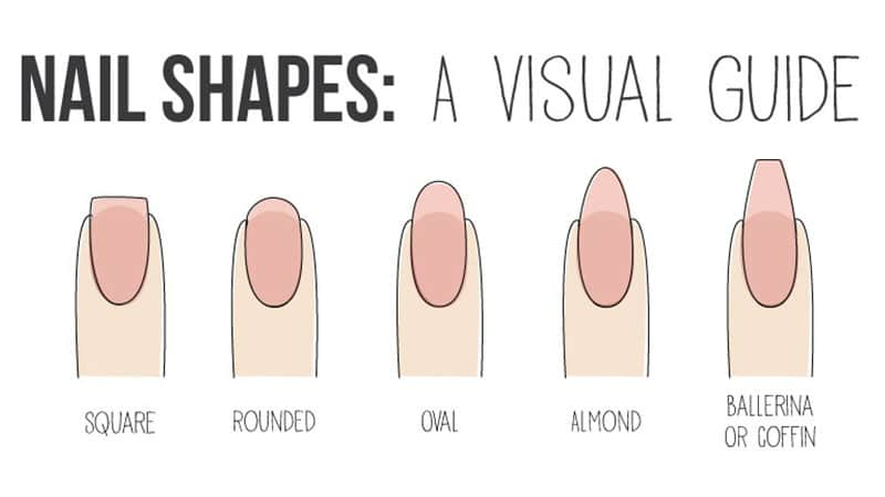 爪の形の見本