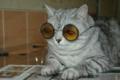 ナイスメガネを紹介しよう