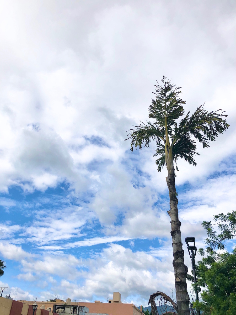 f:id:mexicoi:20191102154732j:plain