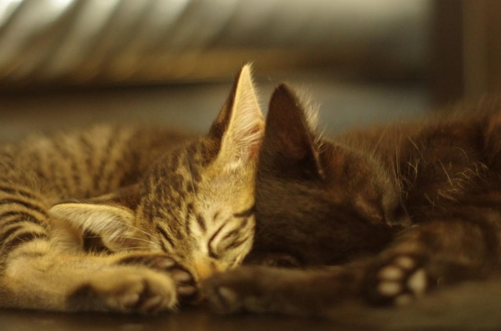 f:id:mfcats:20170713224330j:plain