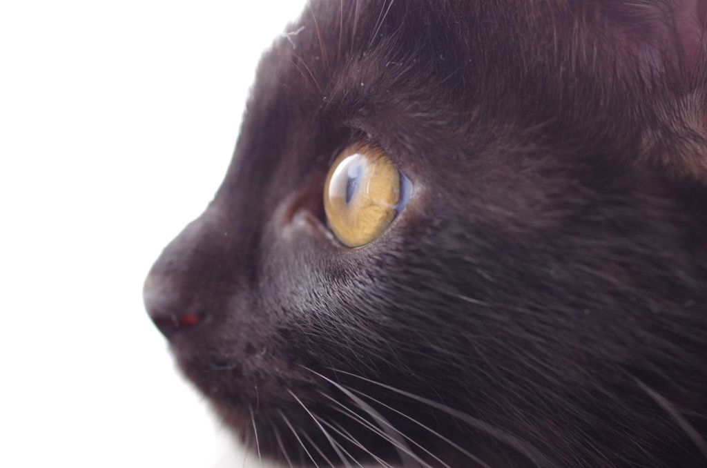 f:id:mfcats:20170725003141j:plain
