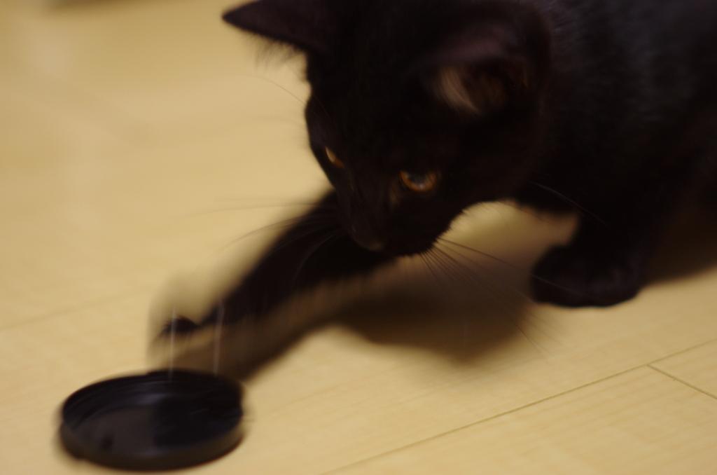 f:id:mfcats:20170816222731j:plain