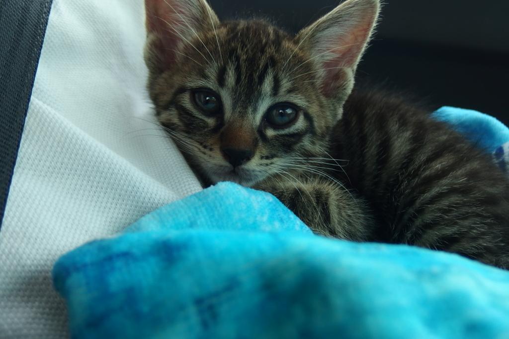 f:id:mfcats:20170820003427j:plain