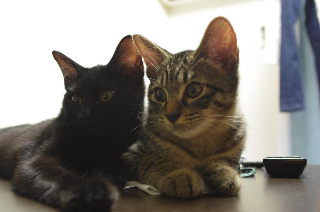 f:id:mfcats:20170907000707j:plain