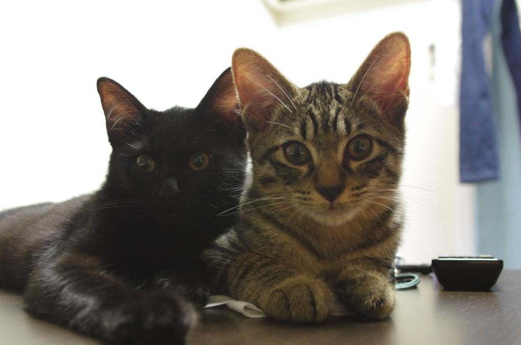 f:id:mfcats:20170907000736j:plain