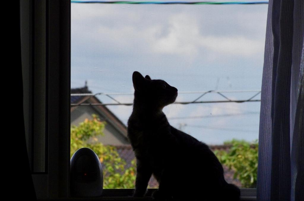 f:id:mfcats:20170912101903j:plain