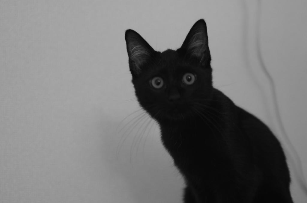 f:id:mfcats:20170916114700j:plain
