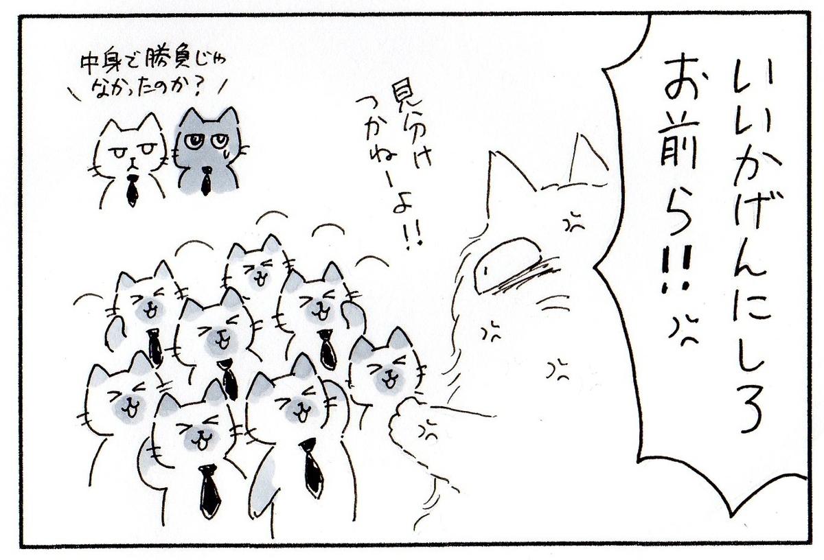 全員新しい毛皮に揃えた猫たちを怒るボス