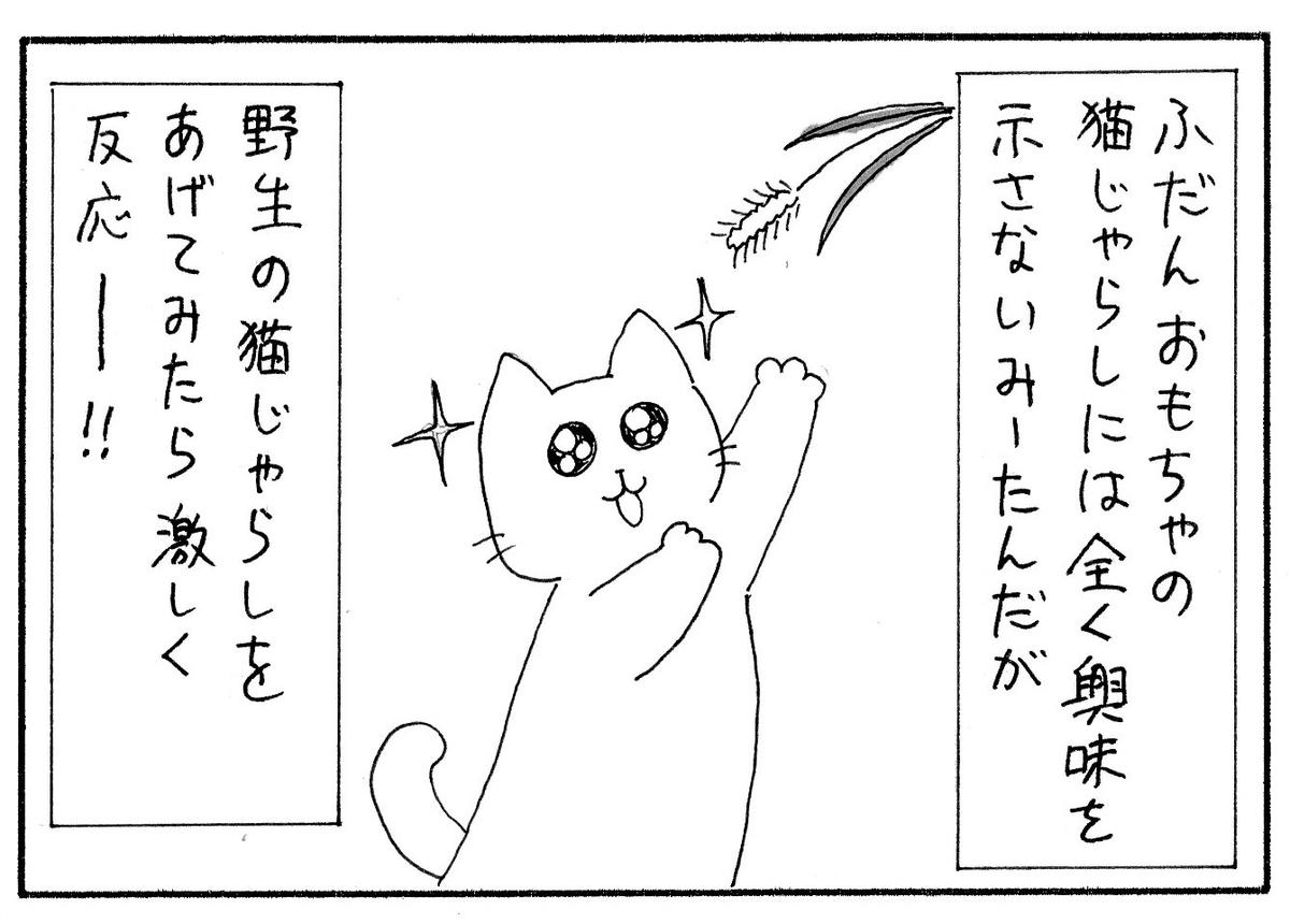 おもちゃの猫じゃらしには興味を示さないが、野生の猫じゃらしには興味津々のみーたん
