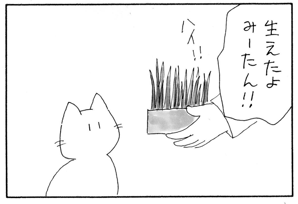 育った猫草をみーたんに見せる私。