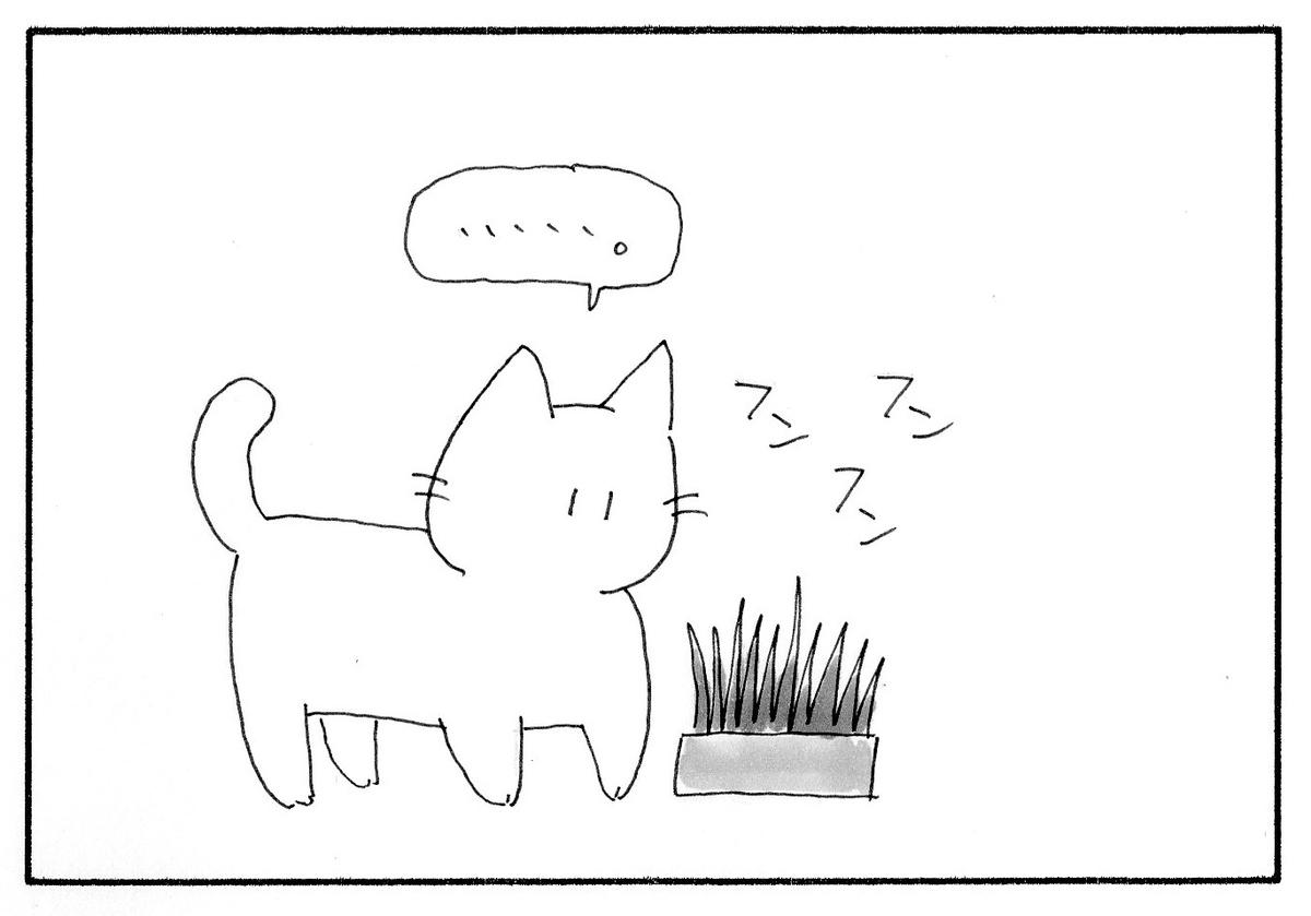 猫草のにおいをかぐみーたん。