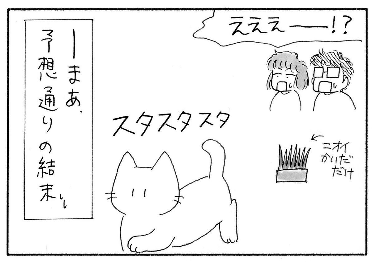 大方の予想通り、においをかいだだけで猫草にそっぽを向くみーたん。
