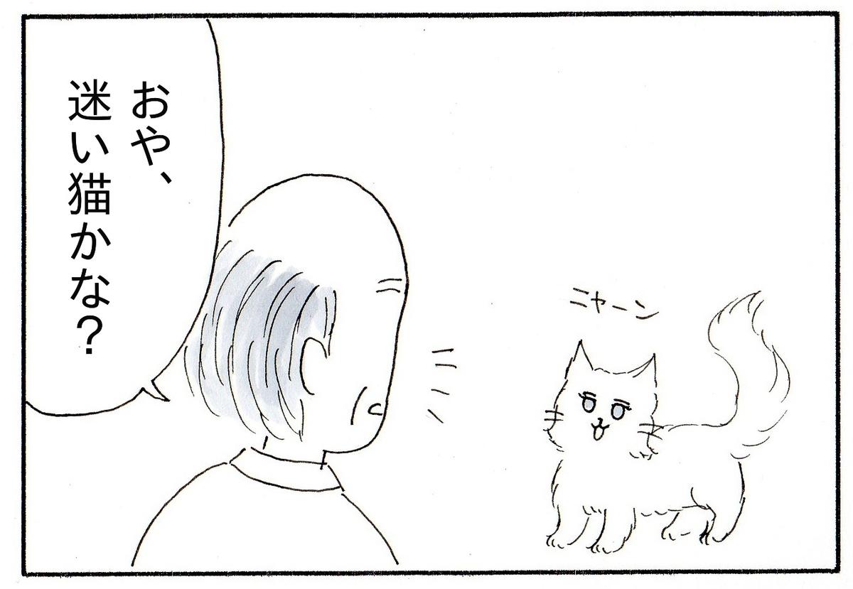 庭に迷い込んできた白い猫とおじいちゃん