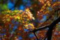 御苑の紅葉