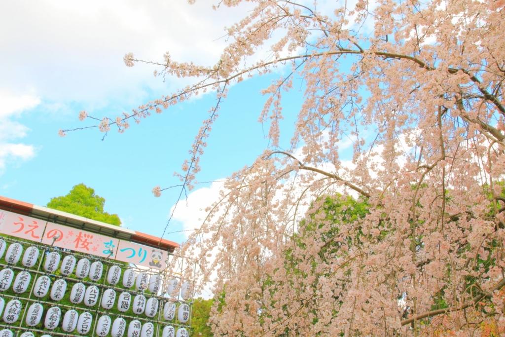 うえの桜まつり①の画像